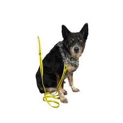Metolius Dog Leash