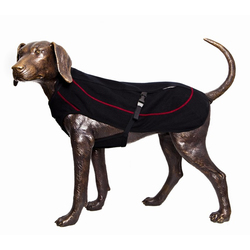 Dog Gear & Accessories